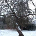 bent branch